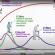 Doenças crônicas e pandemia